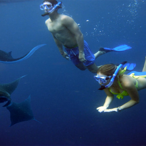 Snorkeling With Manta