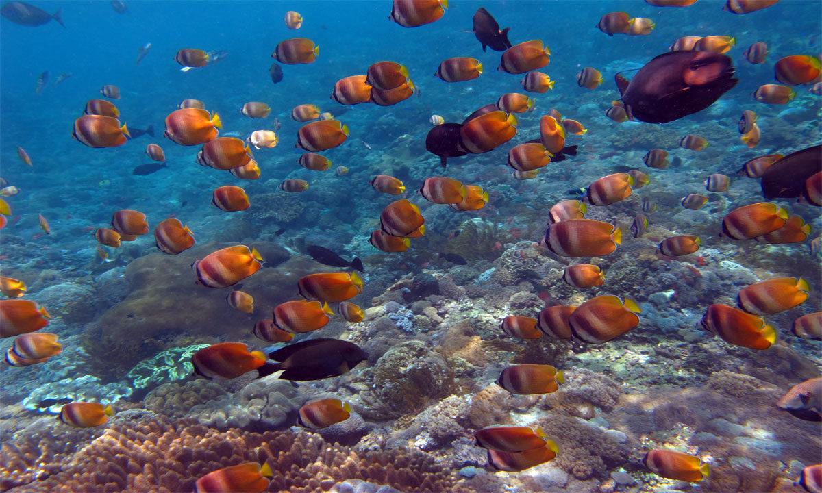 Nusa Penida Snorkeling & Cliff Jumping
