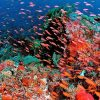 Soft coral and color fish